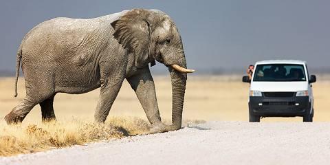 7-Day Etosha Explorer Wildlife Adventure