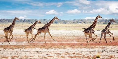 7-Day Namib Desert, Sossusvlei and Etosha