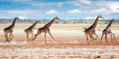 8-Day Self-Drive Wildlife Safari to Okonjima and Etosha