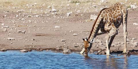 3-Day Etosha National Park Accommodated
