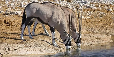 4-Day Okavango Delta Highlights Safari