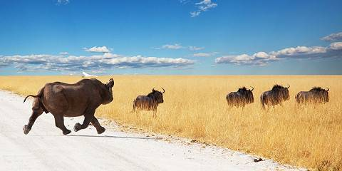 Kenya's Finest Budget Masai Mara, Amboseli Safari