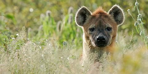 5-Day Group Joining - Manyara, Serengeti and Ngorongoro