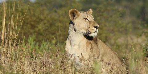 7-Day Pride of Namibia