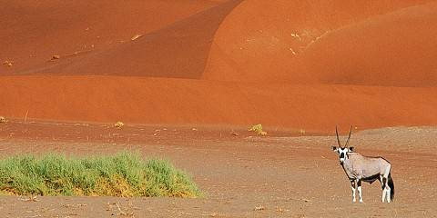 6-Day Namibia - Wildlife, Dunes and Sea