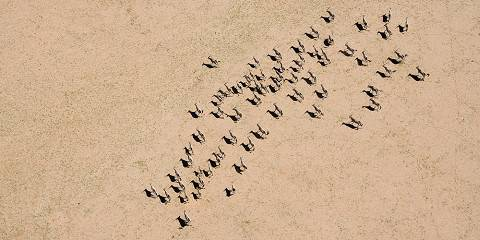 13-Day Best of Namibia Fly in Safari