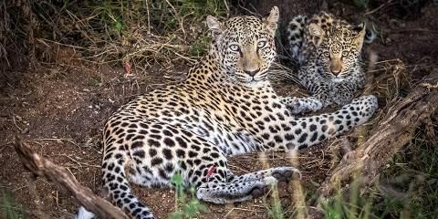 17-Day Zimbabwe - Okavango Delta Wildlife Safari