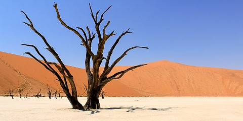 6-Day Namib Desert & Etosha Accommodated Safari