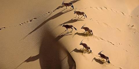 10-Day Safari2Go - Namibia Highlights