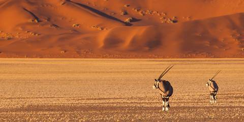 11-Day Namibia Highlights Private Guided Safari- Standard
