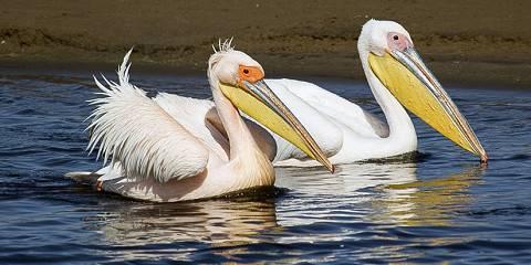 4-Day Namibia Endemics Birding Tour