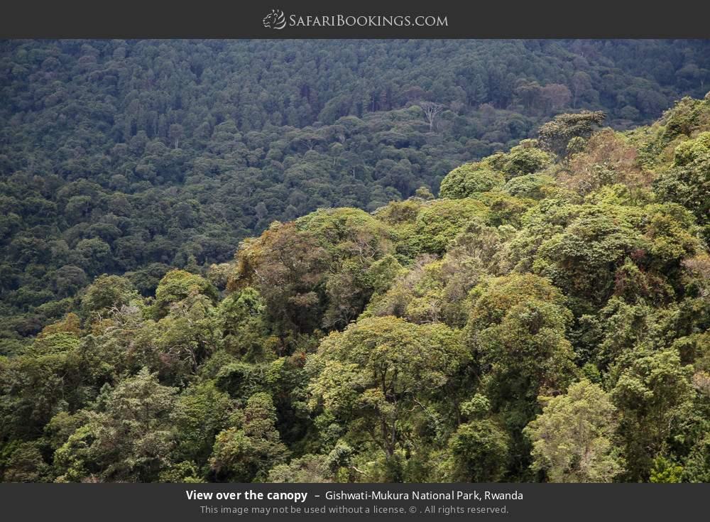 View over the canopy in Gishwati-Mukura National Park, Rwanda