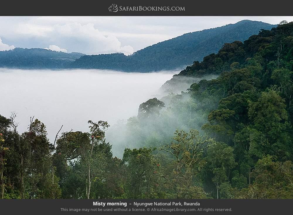 Misty morning in Nyungwe Forest National Park, Rwanda