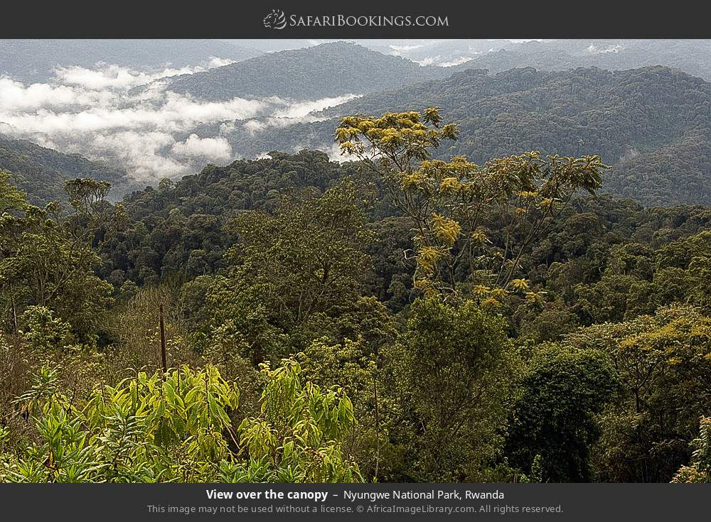 View over the canopy in Nyungwe Forest National Park, Rwanda