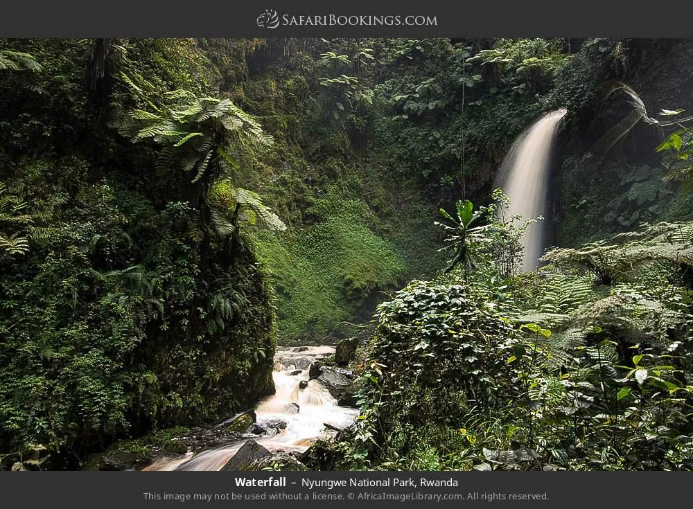 Waterfall in Nyungwe Forest National Park, Rwanda