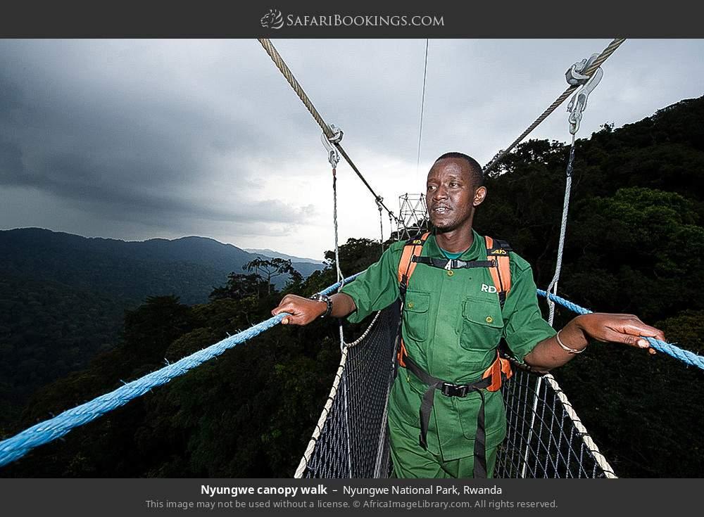 Nyungwe canopy walk in Nyungwe Forest National Park, Rwanda
