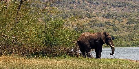 1-Day Akagera National Park Tour
