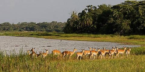 2-Day Akagera National Park Tour