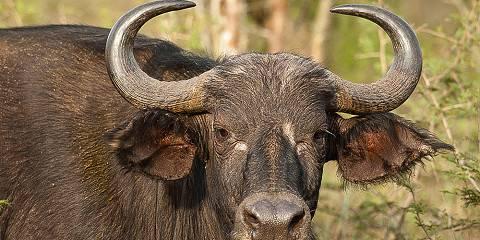 3-Day Rwanda Wildlife Safari in Akagera National Park