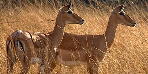 2-Day Rwanda Akagera National Park and Lake Ihema