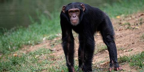 5-Day Chimpanzee Tracking and Akagera National Park