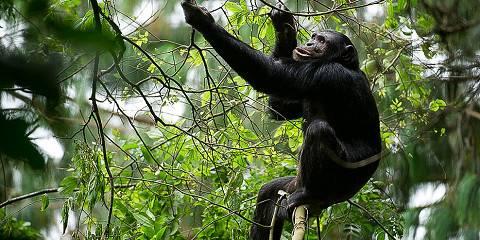 3-Day Nyungwe National Park Tour-Chimpanzees and Monkeys