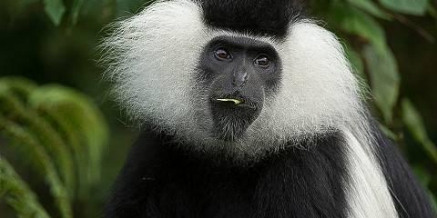 8-Day Primates Tour of Rwanda