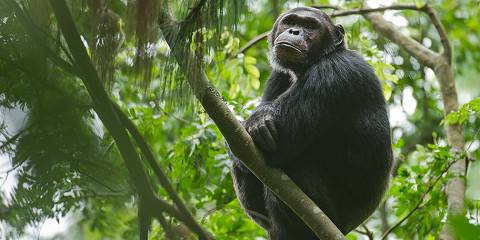 4-Day Gorilla and Chimpanzees Trek