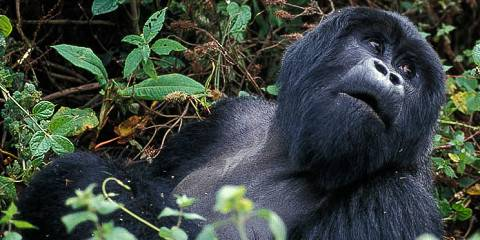 3-Day Rwanda Gorillas Express