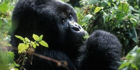 12-Day Rwanda Culture, Adventure and Gorilla Trekking