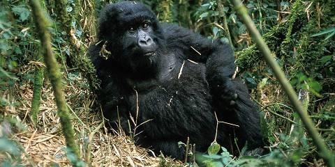 19-Day Ultimate Rwanda & Uganda Safari (Northbound)