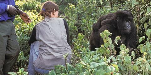 5-Day Rwanda Gorilla Trekking Experience