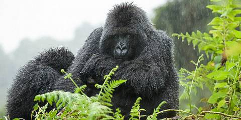 7-Day Uganda Wildness and Gorilla Trekking Safari