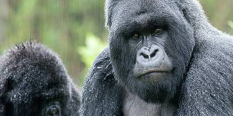 Gorillas & East Africa Tented Safari