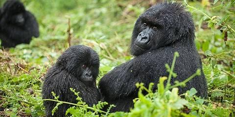 3-Day Rwanda Incredible Gorilla Trekking Mid Tour
