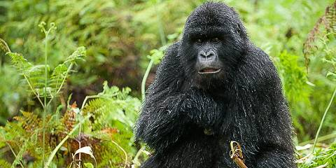 3-Day Rwanda Gorilla Safari (Discounted)