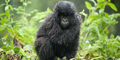 8-Day Trek, Kayak & Explore Rwanda to Meet the Gorillas
