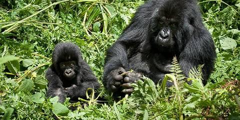 4-Day Rwanda Gorillas Trekking Safari