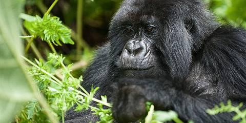 10-Day Uganda and Rwanda African Big Five Mammals