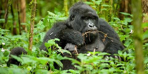 10-Day Best Experience of Rwanda Gorilla Safari