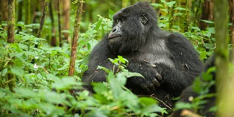 2-Day Rwanda Gorilla Trekking Budget Safari