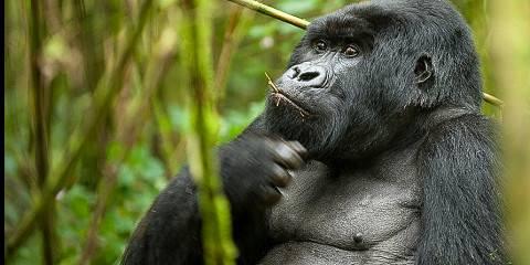 Rwanda Gorilla Trekking and Golden Monkey Tour