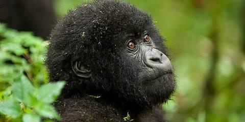 3-Day Rwanda Gorilla Safari & Genocide Tour