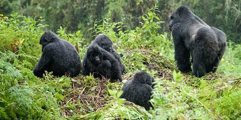 3-Day Rwanda - Comfort - Gorilla Tour