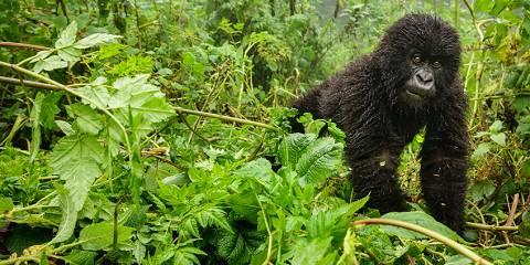 3-Day Rwanda Gorilla Safari Experience
