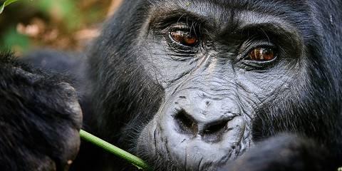 7-Day Best Rwanda Gorilla, Wildlife and Culture Safari