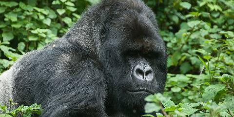 11-Day Uganda & Rwanda Gorillas, Chimps Safari Tour Mist