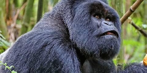 3-Day Gorilla Trekking Safari