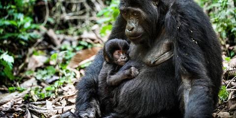 7-Day Best Rwanda Primate Safari and Culture Experience