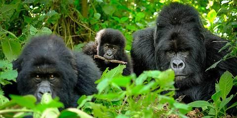 9-Day Rwanda Adventure- the Famous Gorilla & Chimp Trekk